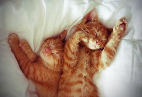 Фото Два рыжих котенка спят рядом