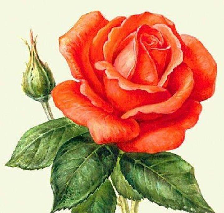 Бордюрные цветы и растения многолетники фото в каталоге и
