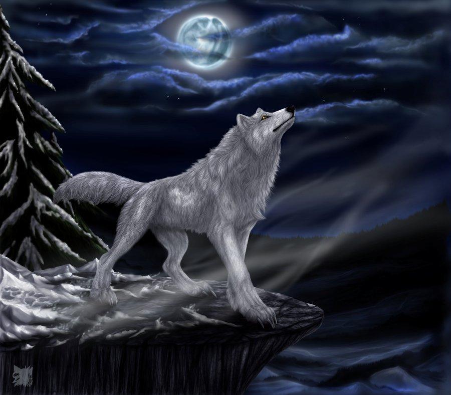 Фото Волк воет на луну
