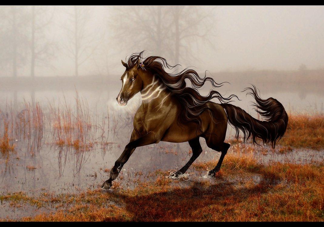 бегать как лошадь картинки вот сможете вот