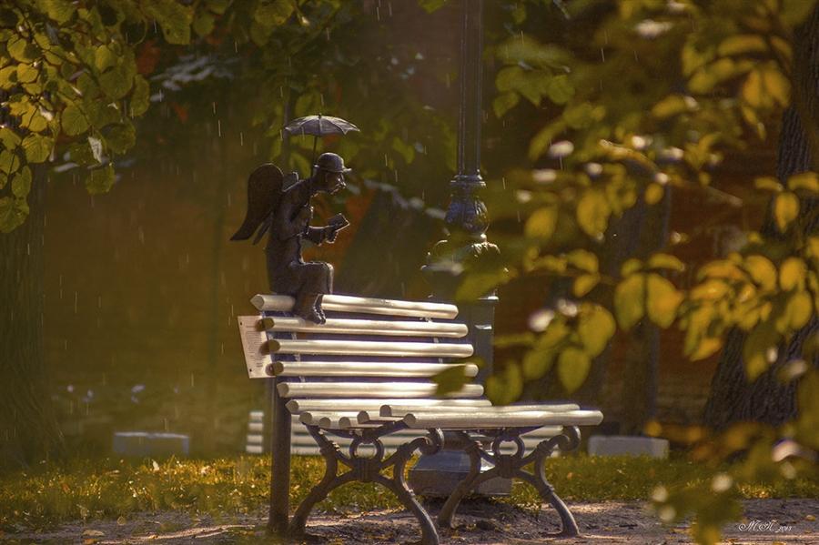 картинки скамейка и дождь появившейся онлайн-форме