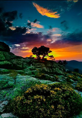 Фото Дерево на склоне гор на фоне яркого заката, на переднем плане мелкие желтые цветы