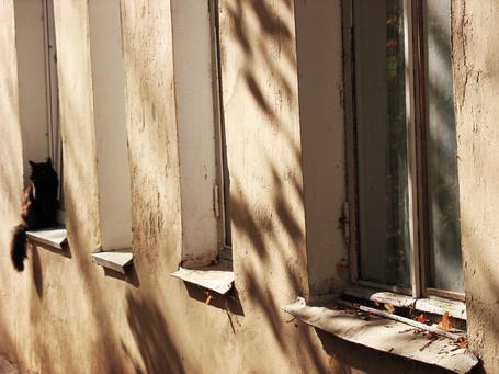 Фото Старые окна, покрытые осенней листвой с черным котом, сидящем на последнем окне (© CRaght), добавлено: 06.11.2013 11:37