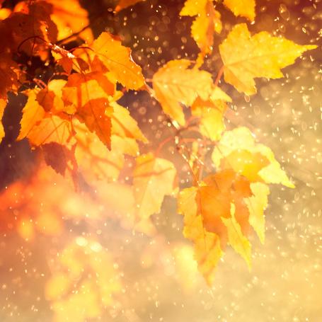 Фото Мокрые осенние листья в солнечном свете (© zmeiy), добавлено: 06.11.2013 14:37