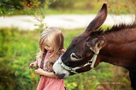 Фото Маленькая девочка с цветами в руках рядом с осликом, фотограф Сапронова Ирина