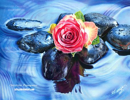 Фото Розовая роза лежит на камнях в воде, художница Сhristina Papagianni (© zmeiy), добавлено: 07.11.2013 11:20