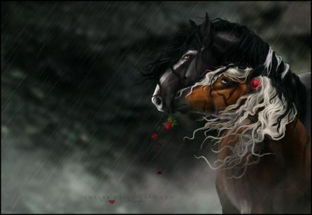 Фото Две влюбленные лошади под дождем, автор Yewrezz
