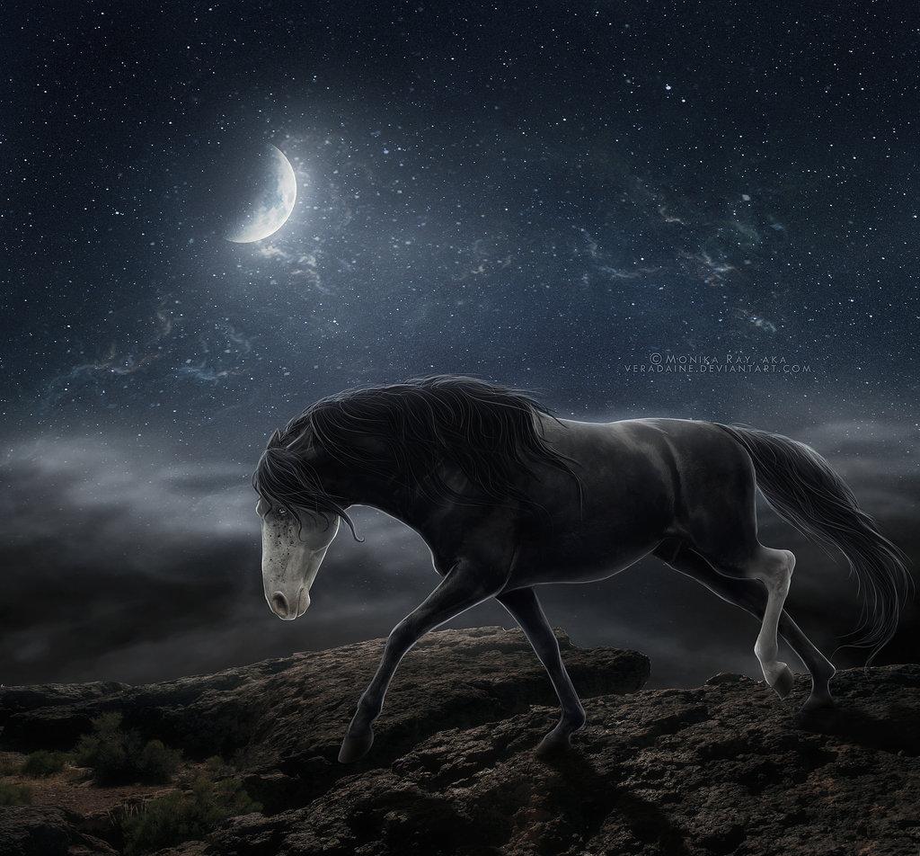 лошадь картинки ночью показалось тут меньше