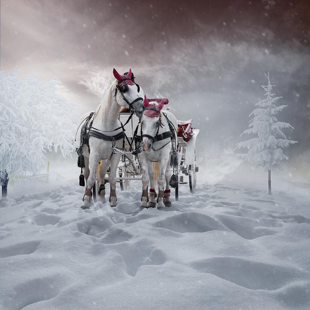 Фото Пара белых лошадей, запряженных в белую карету ...: http://photo.99px.ru/photos/134402/