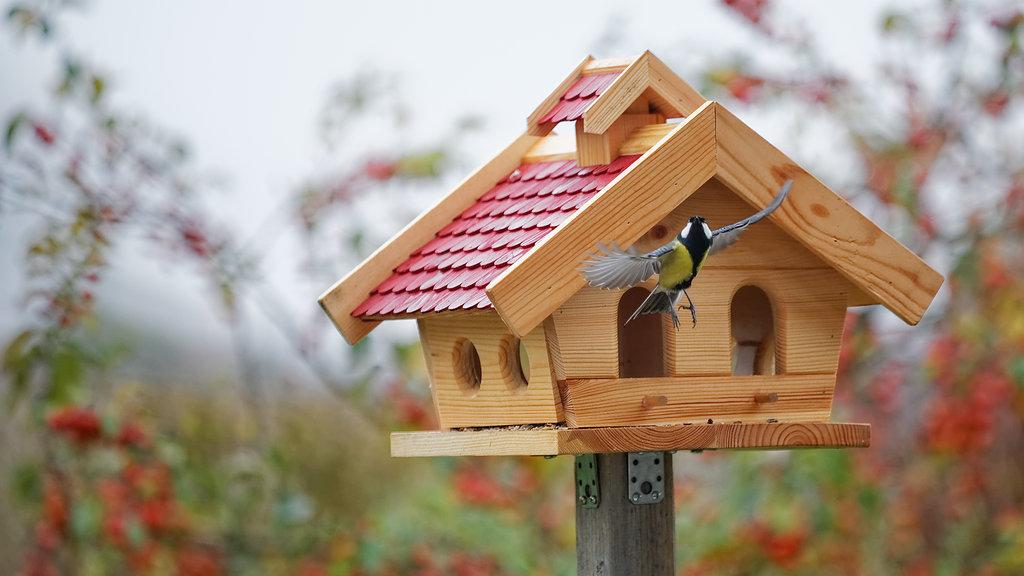 Строгальные Фото кормушек для птиц своими руками