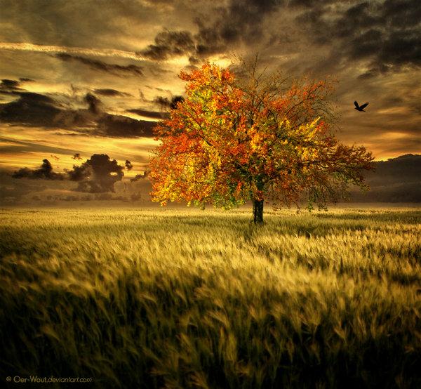 Фото Одинокое дерево с желтой кроной на фоне кучевых ...