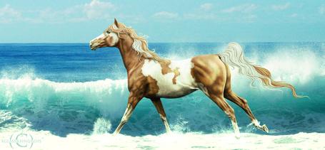 Фото Пятнистая лошадь бежит по берегу на фоне морских волн и голубого неба, автор xglassraindrops