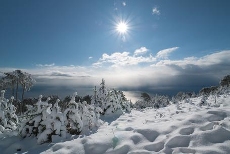 Фото Яркое солнце освещающее деревья усыпанные снегом