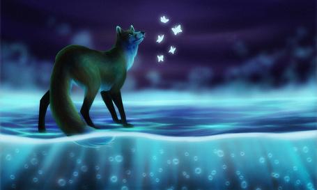 Фото Лиса смотрит на светящихся бабочек, художница t1sk1jukka