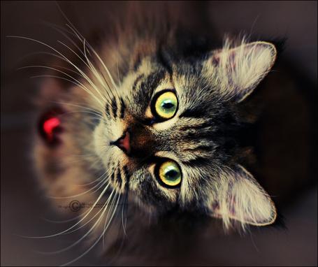 Фото Серый кот смотрит вверх