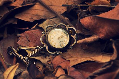 Фото Карманные часы на осенней листве