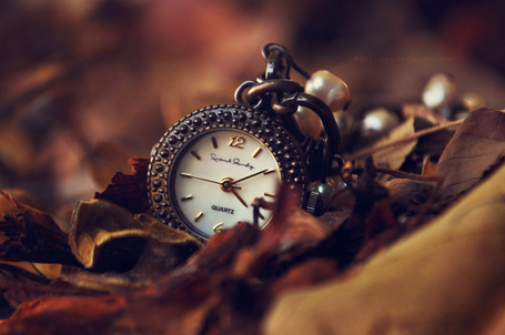 Фото Карманные часы в сухой осенней листве