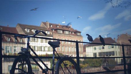 Фото Пролетающие мимо домов чайки