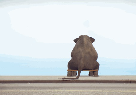 Фото Слон сидит на скамейке, смотря на море и пролетающих мимо птиц