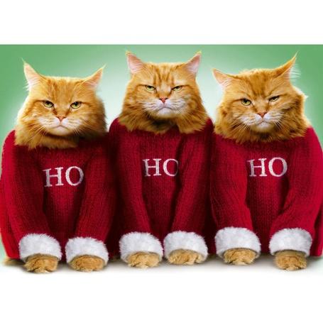 Фото Три рыжих кота одеты под стать деду морозу, с надписью на свитерах HO / эй
