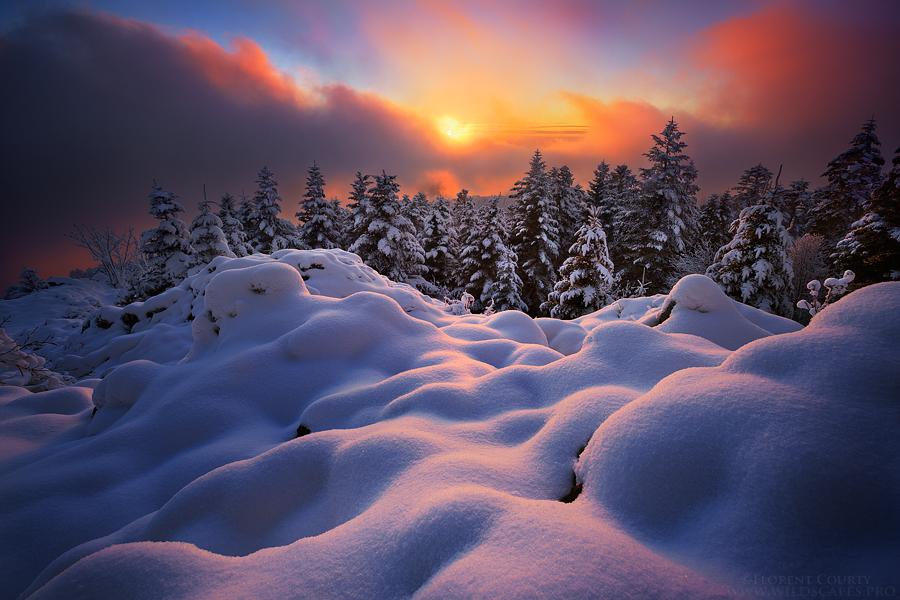 Земля, укрытая снегом и хвойный лес в снегу на фоне заката, автор FlorentCourty