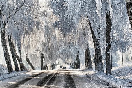 Фото Асфальтовая дорога, покрывающаяся мокрым, падающим снегом с проходящими по ней легковыми автомобилями, со стоящими по ее обочинам деревьями, покрытые инеем и снегом, автор Daiva