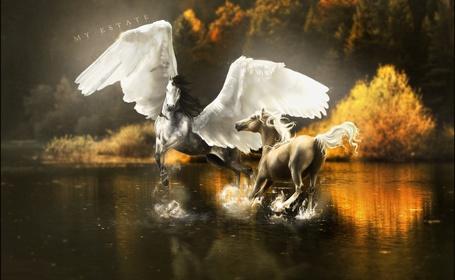 Фото Белая и золотистая лошади - ангелы бегают по воде