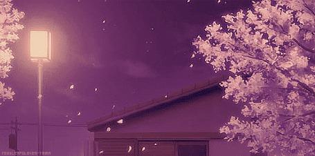 Фото С цветущей сакуры облетают лепестки