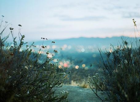 Фото Трава на переднем плане в макросъемке