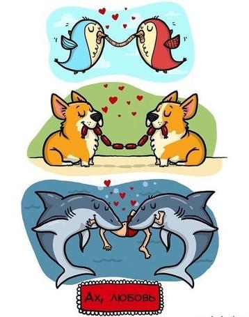 Фото Влюбленные птицы едят одного червяка, собаки - сосиски, а акулы едят человека (Ах, любовь)