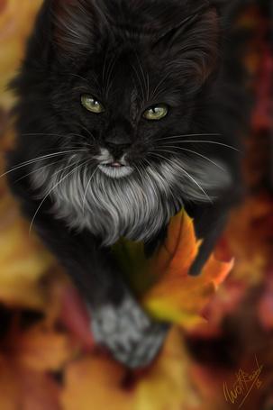 фото сидящий кот