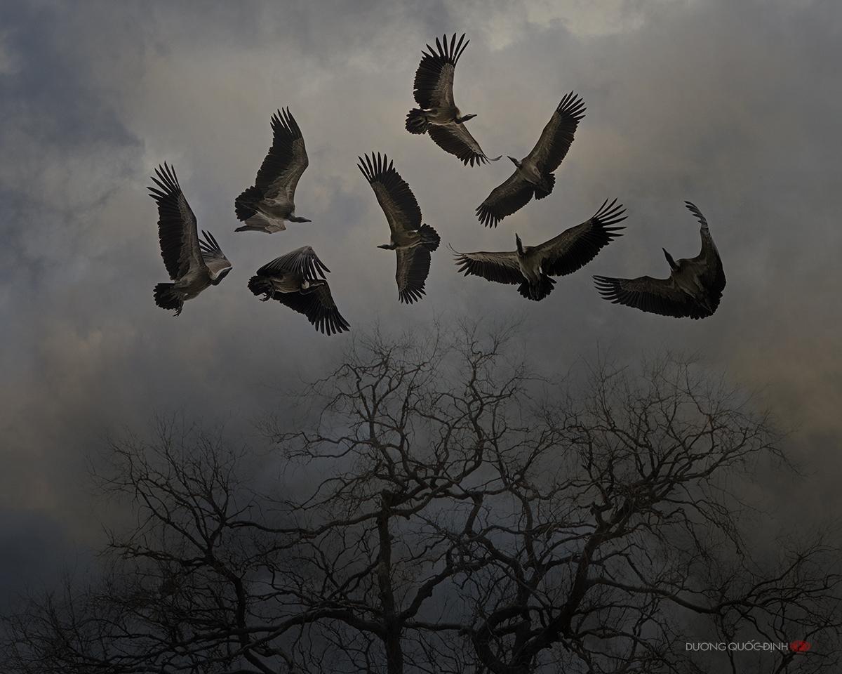 картинка стаи орлов обожает фасон