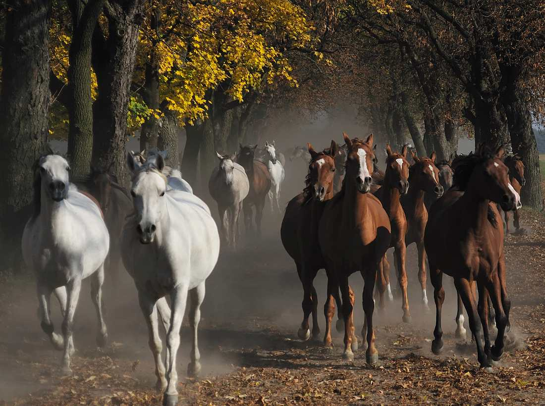 Фото дороги осенней