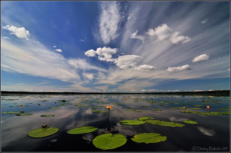Фото Водоем с растущими на нем кувшинками среди больших, темно-зеленых листьев на фоне синего неба с кучевыми и перистыми облаками, автор Дмитрий Бакулин
