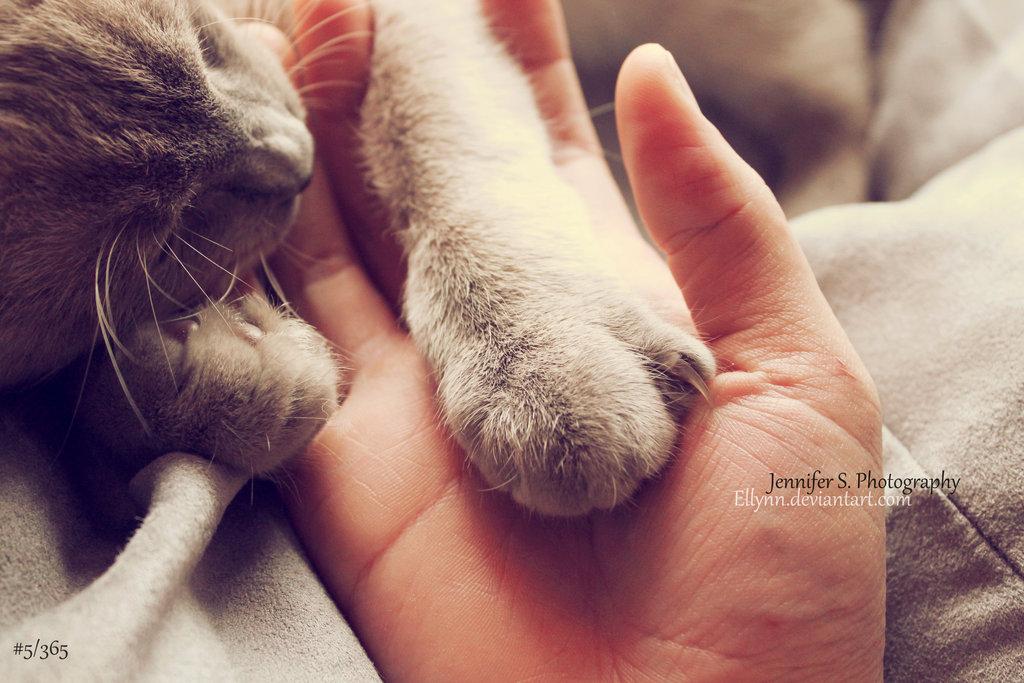 Усну на руках картинки