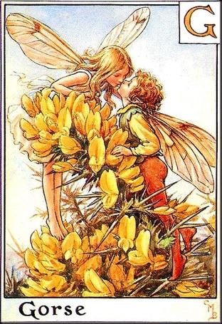Фото Рисунок Сесиль Мэри Баркер Две целующиеся цветочные феи держатся за акацию (Gorse)
