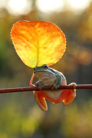 Фото Лягушка, сидящая на ветке рядом с желтым осенним листочком