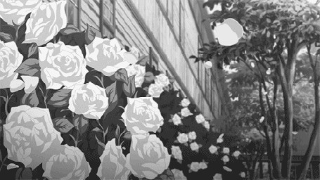 Фото С роз облетают лепестки