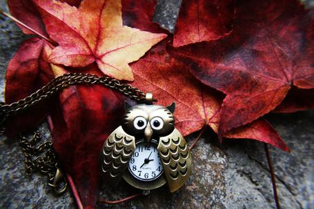 Фото Часы в форме совы на цепочке в осенних листьях, автор AnOtherSunrise