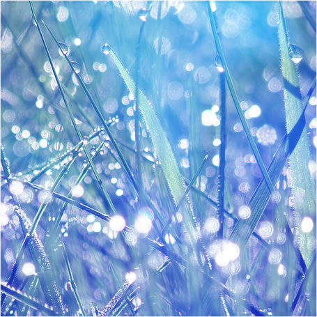 фото трава с росой