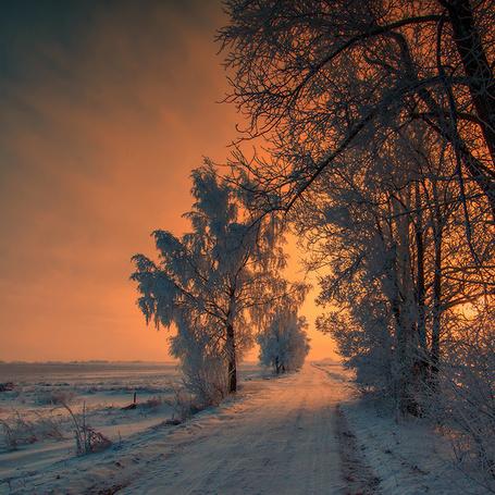 Фото Заснеженная грунтовая дорога, проходящая вдоль лесопосадки на фоне заката на пасмурном, вечернем небосклоне (© Felikc), добавлено: 12.02.2014 21:04