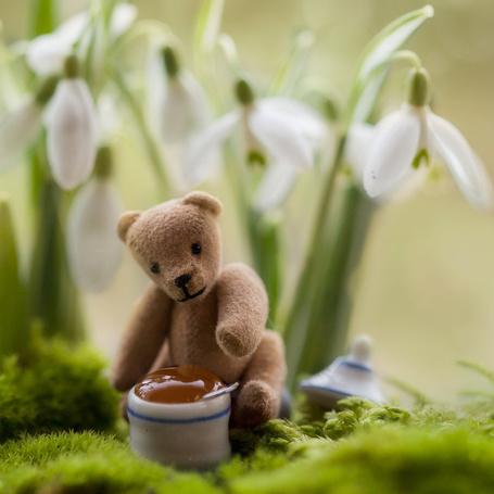Фото Игрушечный мишка сидит возле горшочка с медом на фоне подснежников