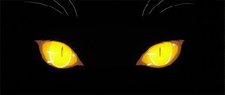 Фото Желтные глаза кошки
