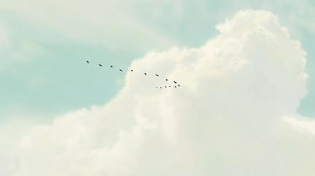 Фото Стая птиц летящих в ясном небе на фоне облака