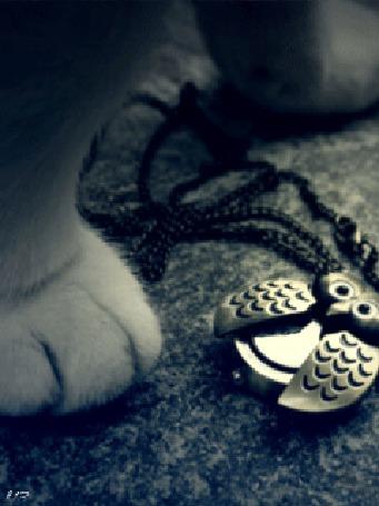 Фото Около кошки лежит кулон ввиде совы