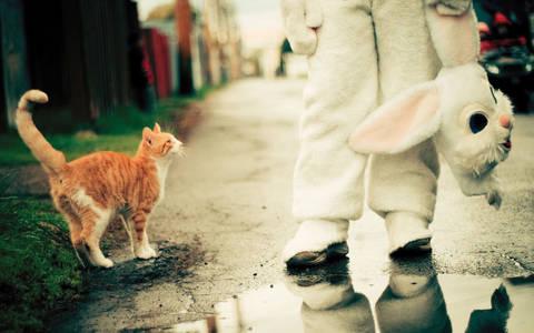 Фото Рыжий кот встретил на дороге человека переодетого в костюм кролика