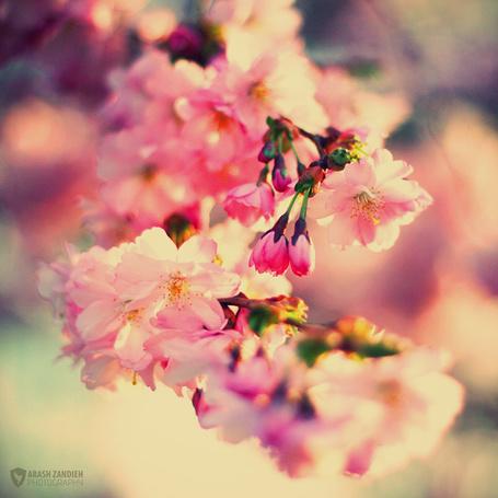 Фото Весенняя веточка цветов, автор AZandieh (© zmeiy), добавлено: 19.02.2014 12:29