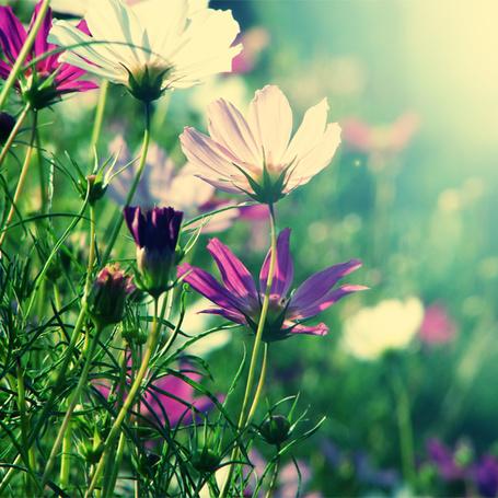Фото Разноцветные цветы в солнечном свете, фотограф edytaserafin