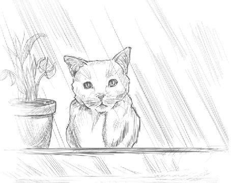 Фото Кошка смотрит на дождь за окном, девушка подходит и гладит ее по голове