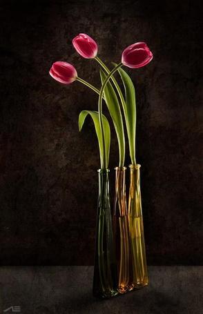Фото Три вазы с розовыми тюльпанами на черном фоне